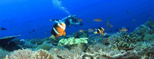 Scuba Diving in Vengurla