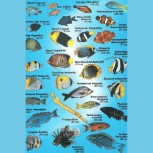 fish identification chart